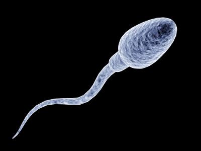 adn-de-espermatozoide