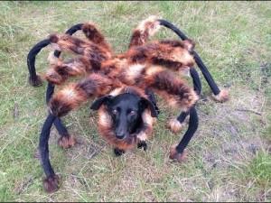 La araña mutante broma